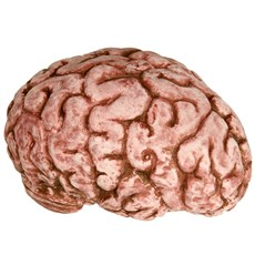 Bloody Brain (Latex)
