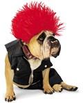Zelda Punk Dog Costume