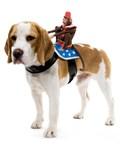 Monkey Dog Rider Pet Costume