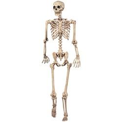 Lifesize Pose N Stay Skeleton