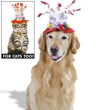 Pet Costume - Birthday Hat