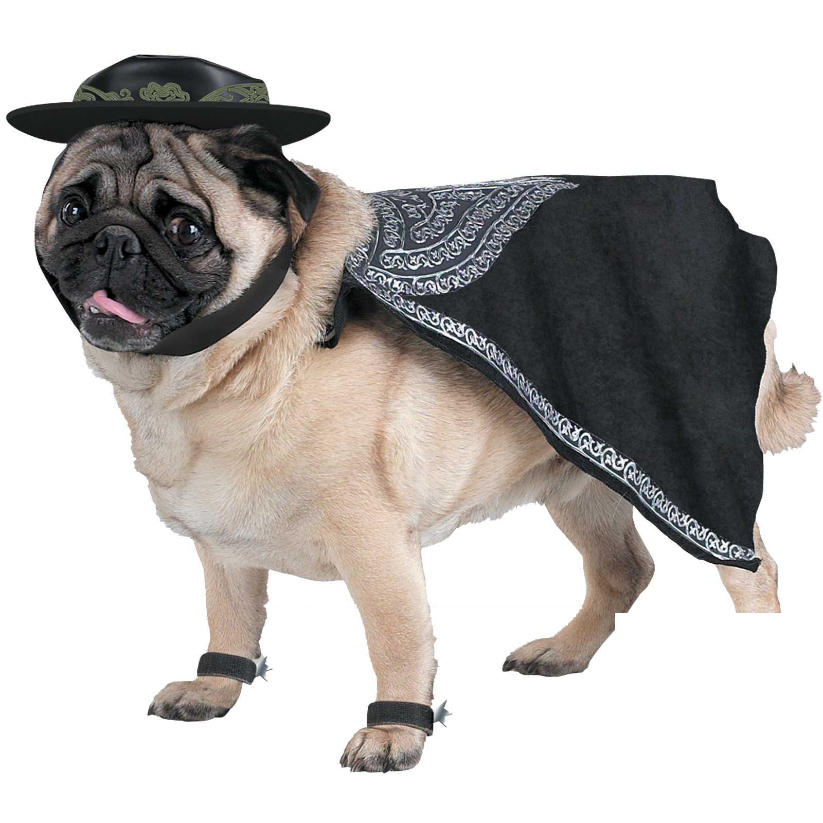 Zoro the Pug