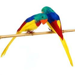 10 Parrot Asst (1 count)
