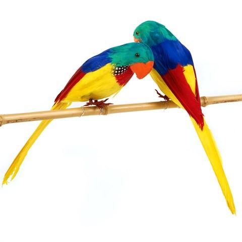 """10"""" Parrot Asst (1 count)"""