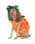 Pumpkin Patch Pooch Pet Costume