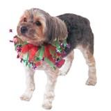 Organza Ribbon Ruff W/Stars Pet Costume Medium