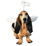 Lil' Angel Pet Costume