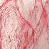 Bloody Spider Web