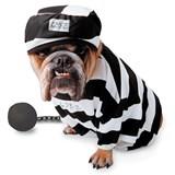 Zelda - Prisoner Pet Costume