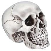 "6 "" Foam Skull"