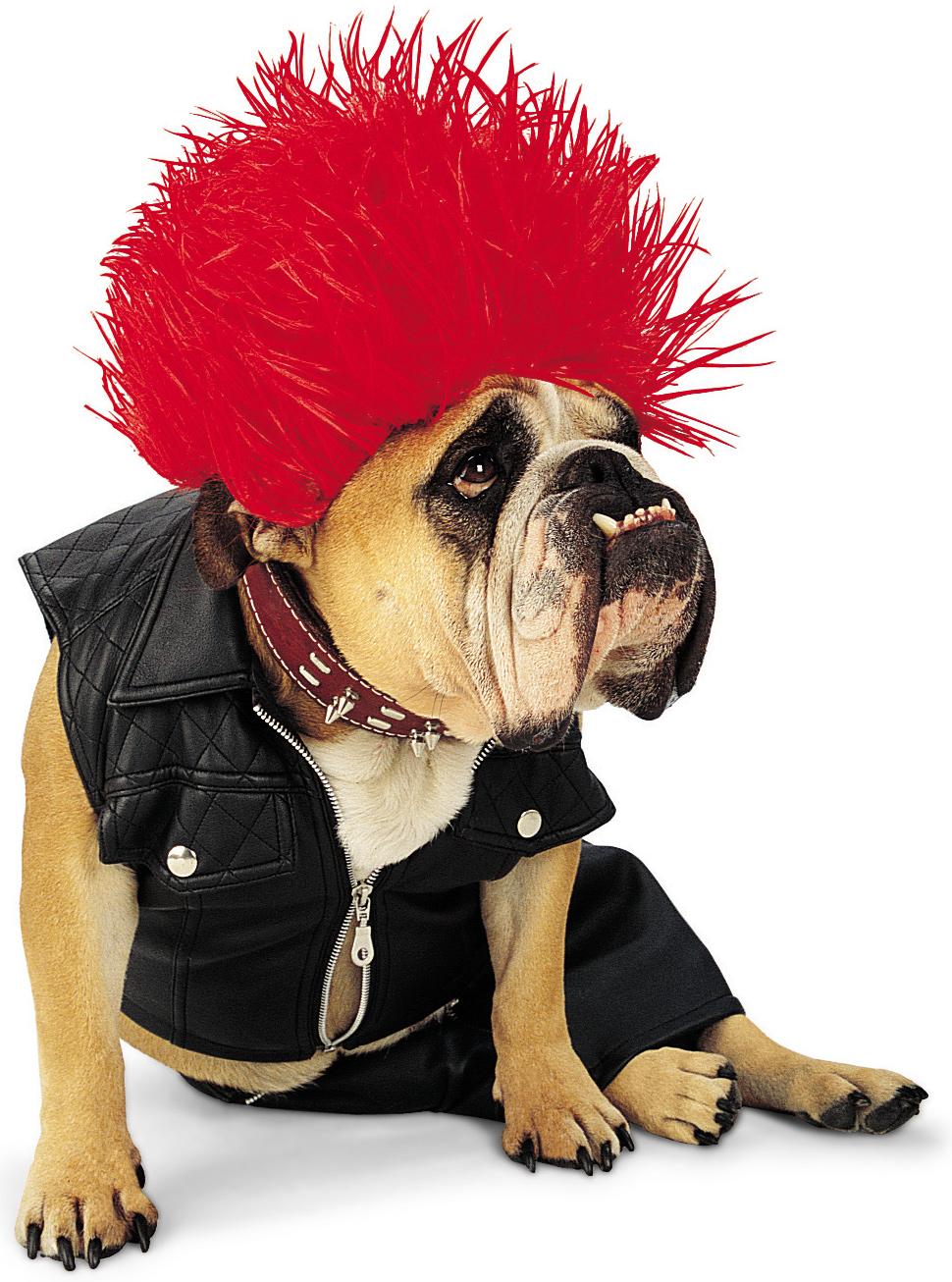 You Rock Dog