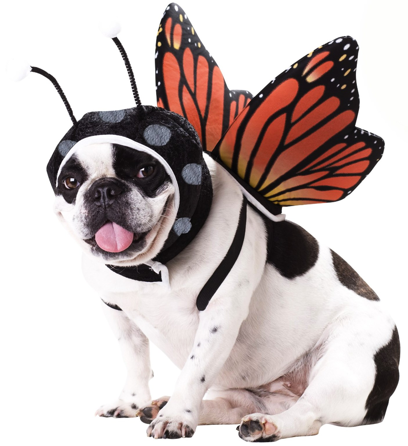 Image of Butterfly Pet Costume