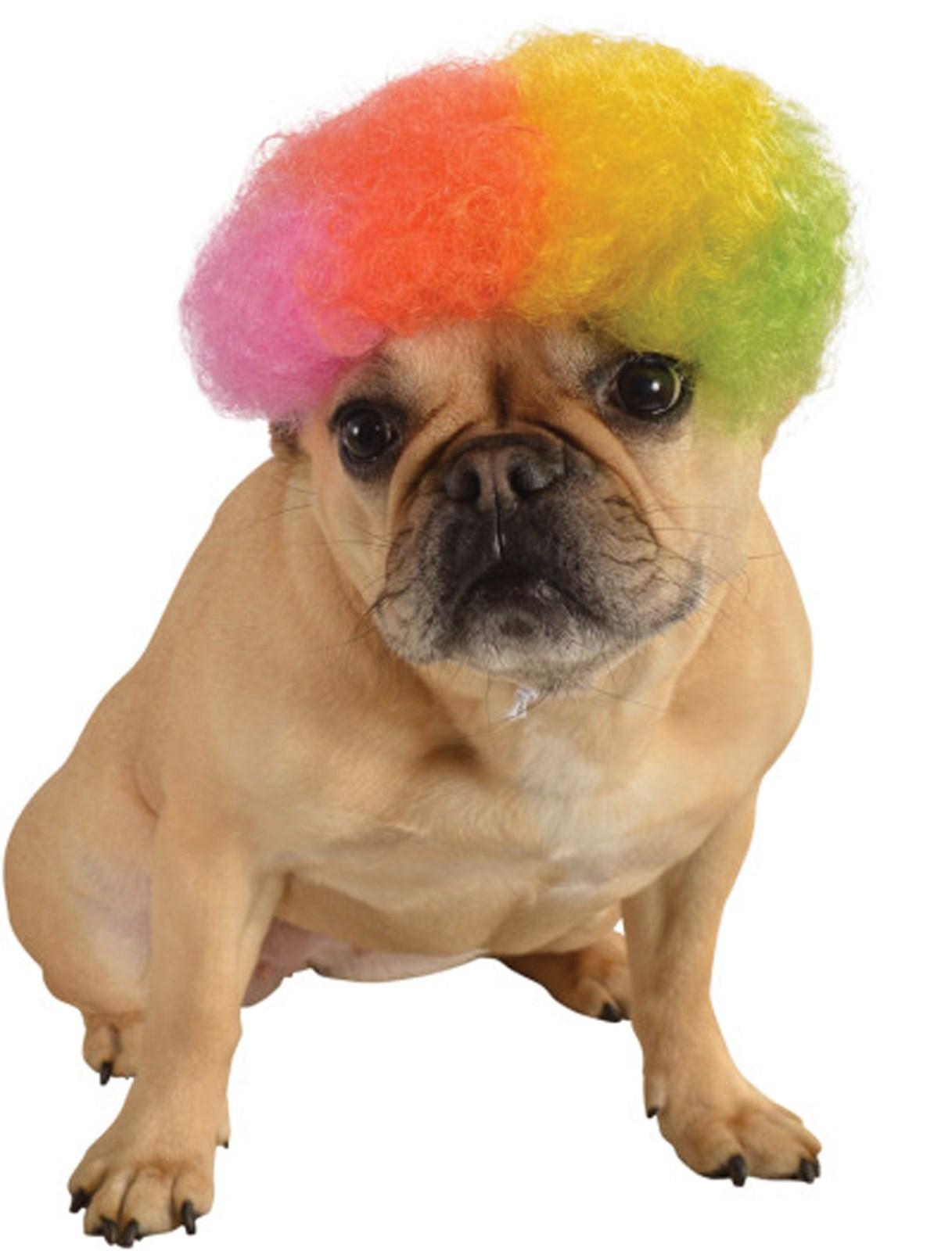 Rainbow Afro Pet Wig