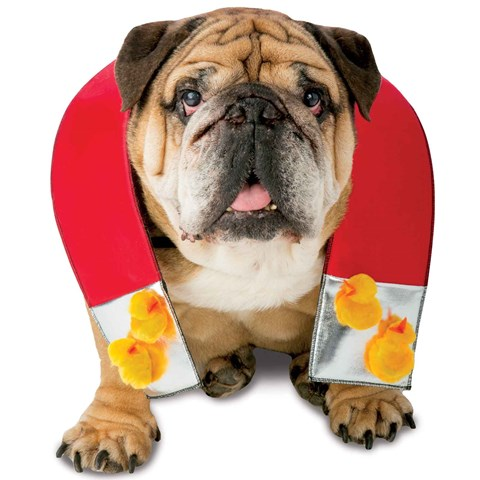 Chick Magnet Pet Costume