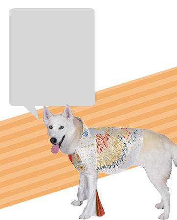 Dog Elvis Bio