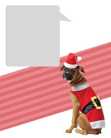 Santa Dog Bio
