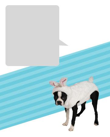 Bunny Dog Bio