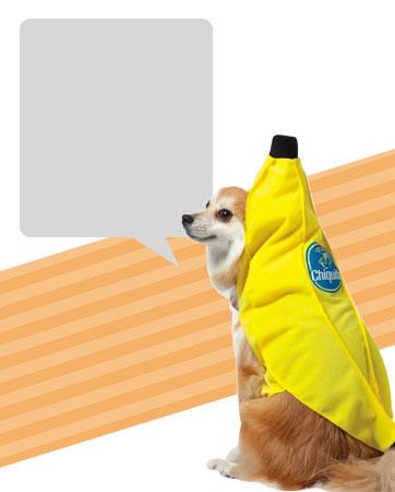 Banana Dog Bio