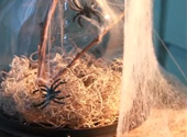 How to decorate with Spiderwebs