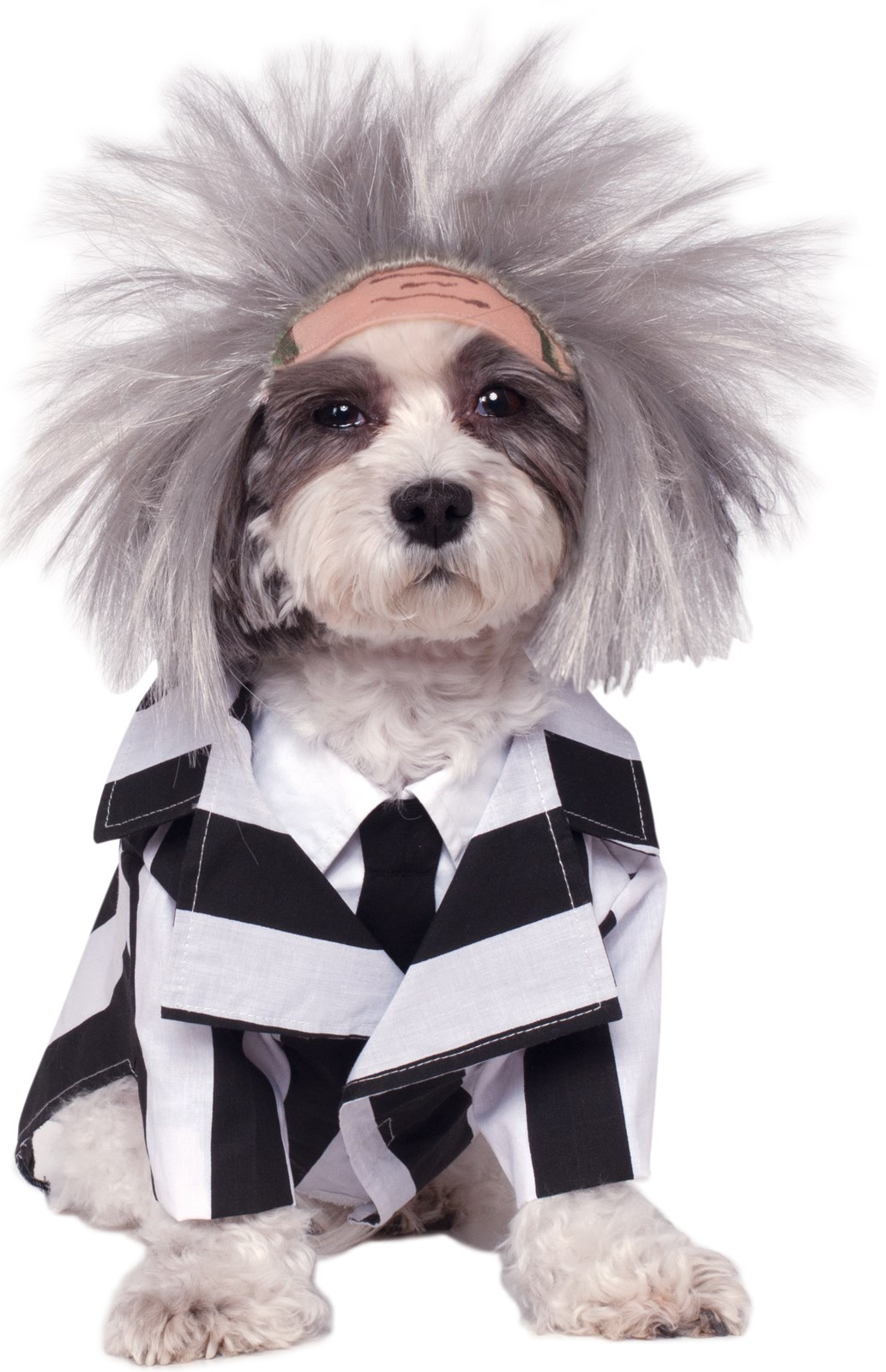 Halloween Costumes For Dogs   BuyCostumes.com