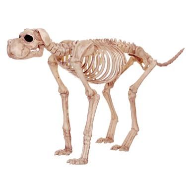 Large Skeleton Dog