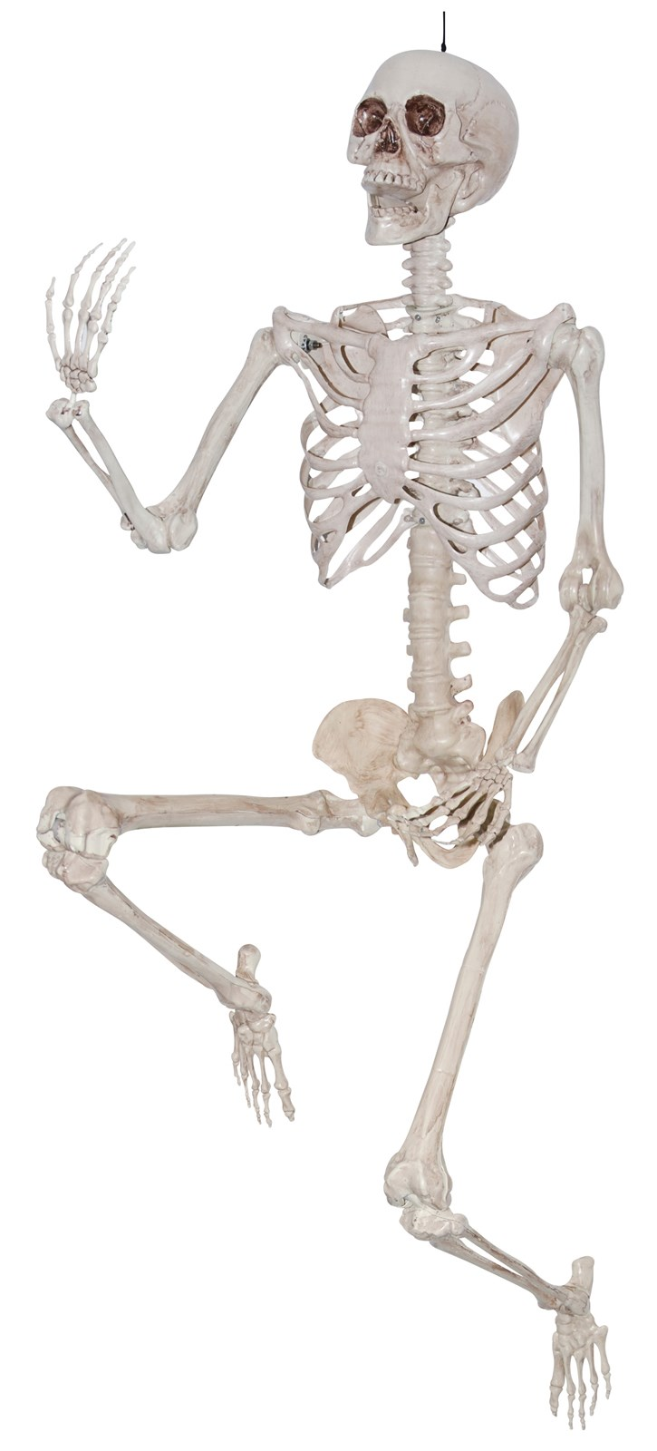lifesize pose and hold skeleton buycostumes com