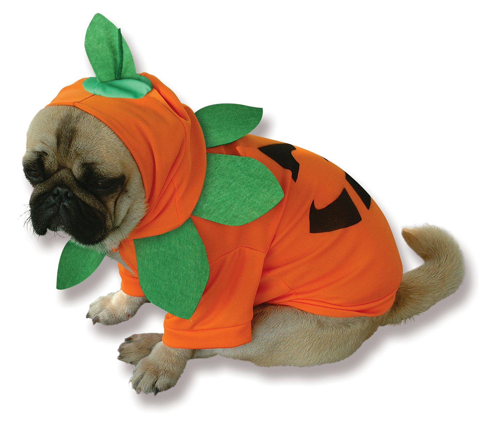Best Dog Costume Ever Pumpkin