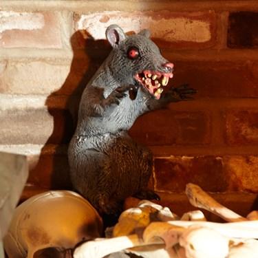 Sitting Evil Rat