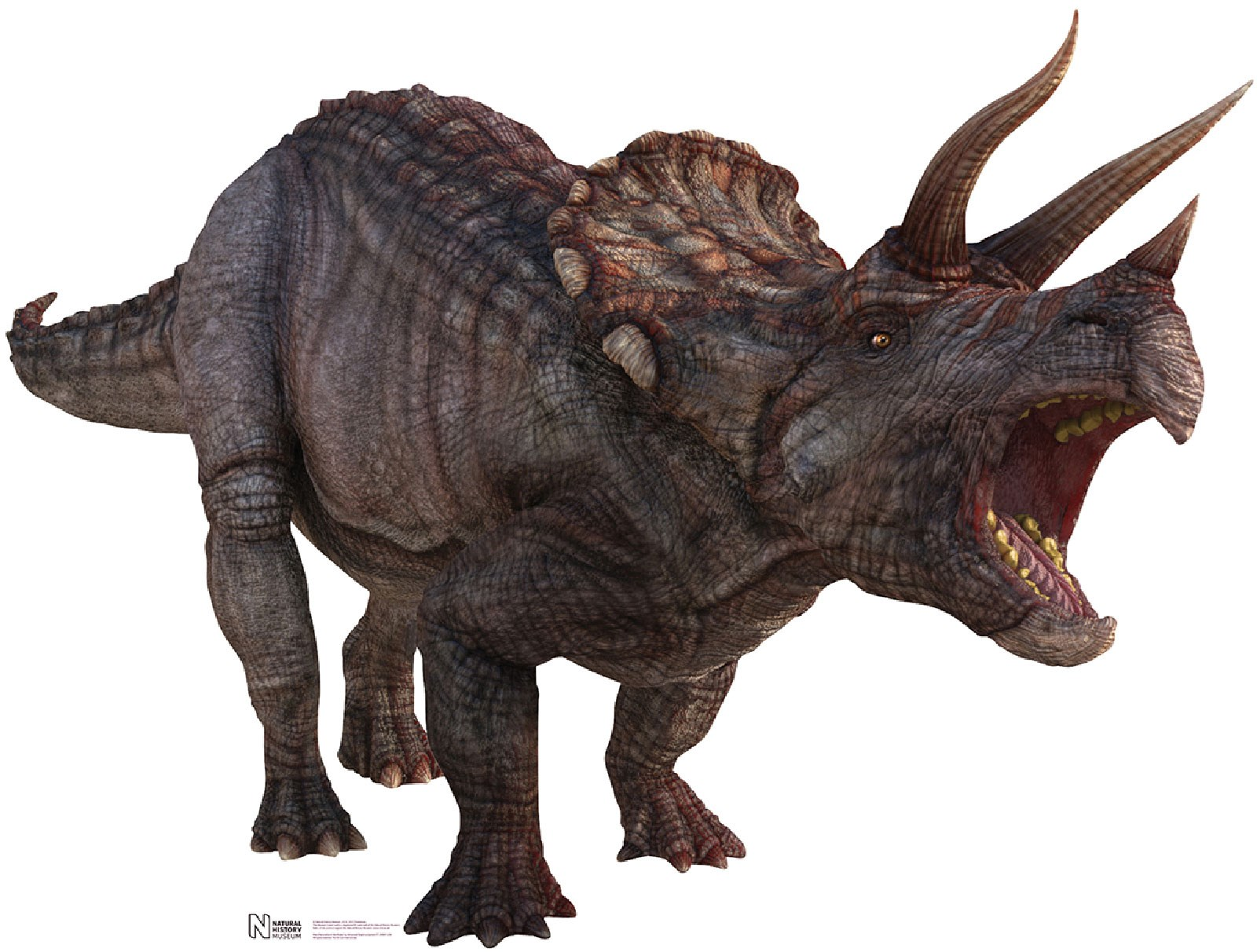 Triceratops Cardboard Stand Up 4
