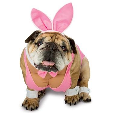 Zelda Hunny Bunny Pet Costume